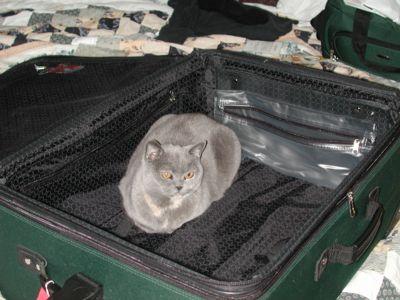 Cat Zen 70305.jpg