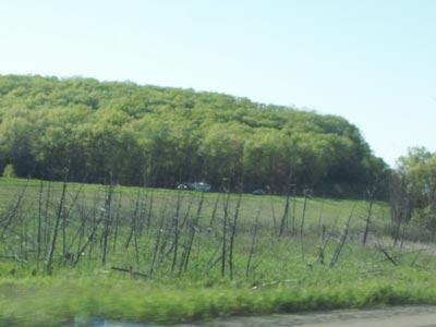 DeadTrees.jpg