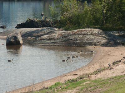 Geeses.jpg
