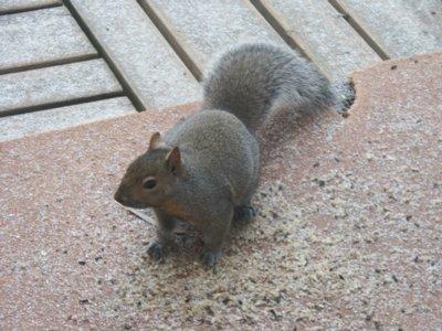 HiyaSquirrel.jpg