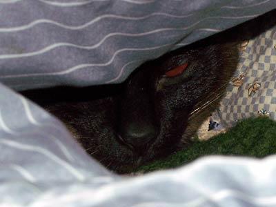 I_hides_in_bed.jpg