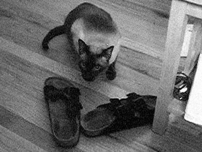 IsaakShoes.jpg