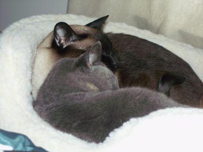 KittiesNotQuiteAwake.jpg