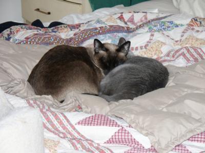 KittySnooze.jpg