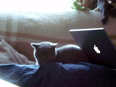 LaptopVandy.jpg