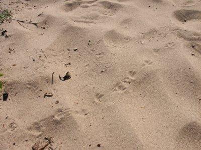 SandTracks0506.jpg
