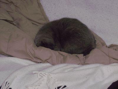 SleepyLittleKitty.jpg