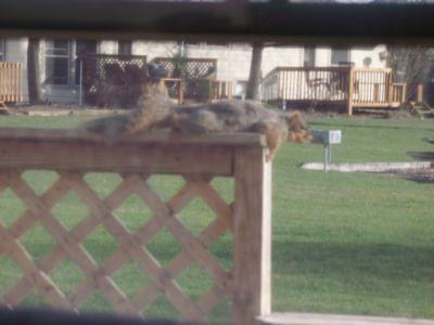 SquirrelSloth.jpg