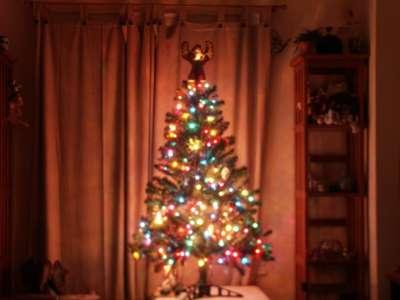 TreeBlur.jpg