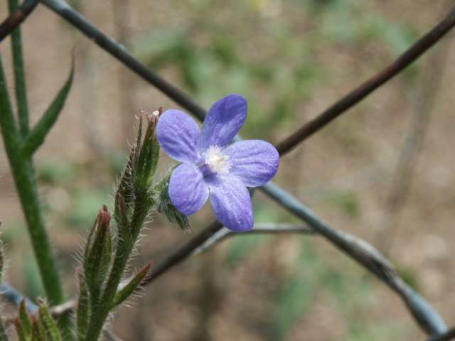 BlueFence