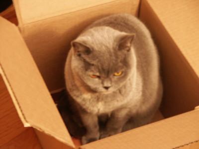 GrumpyBoxedVandecat