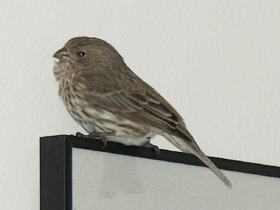 Sudden Bird